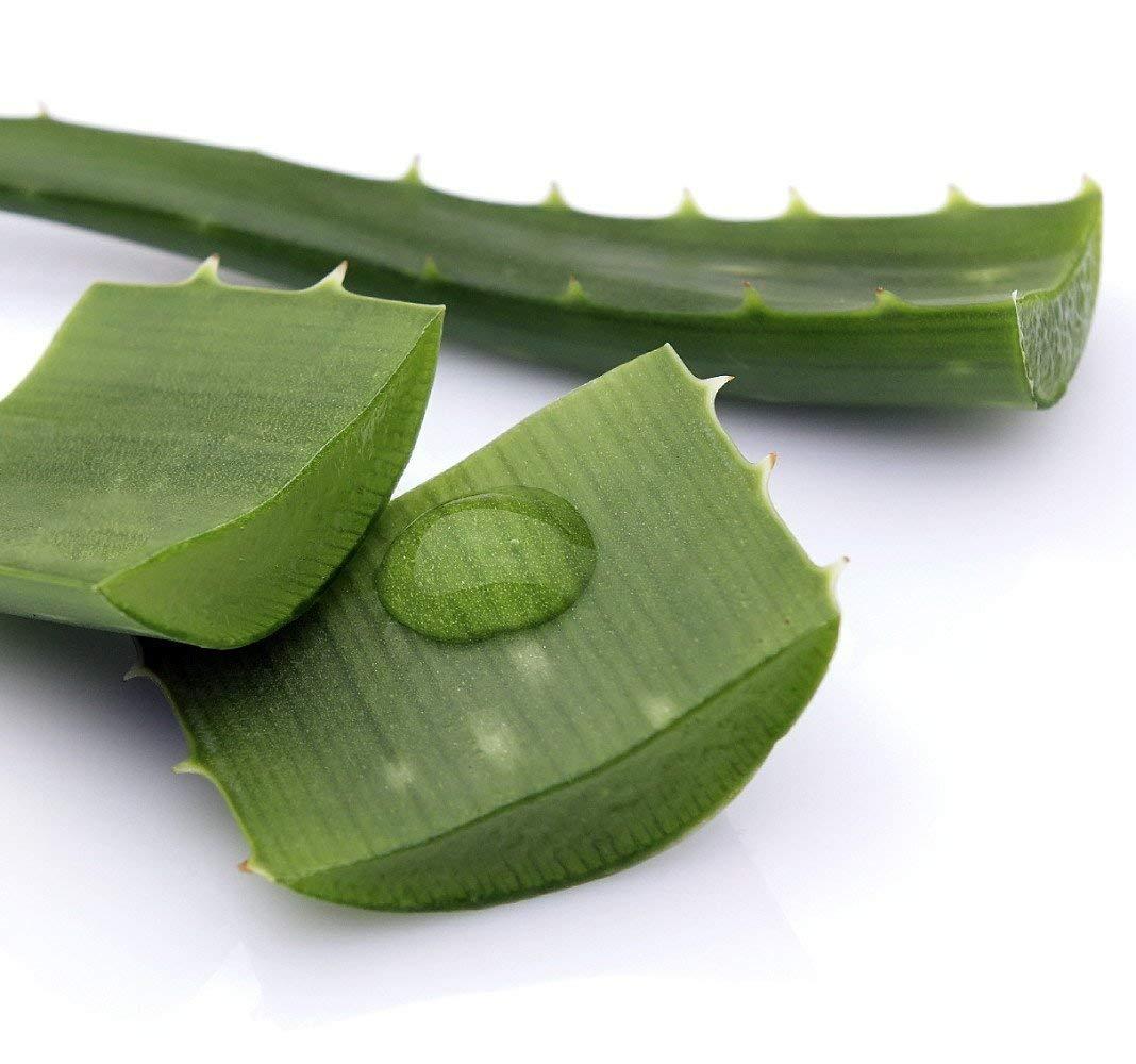 Az aloe vera segít pikkelysömör esetén - Drunix Cikkek