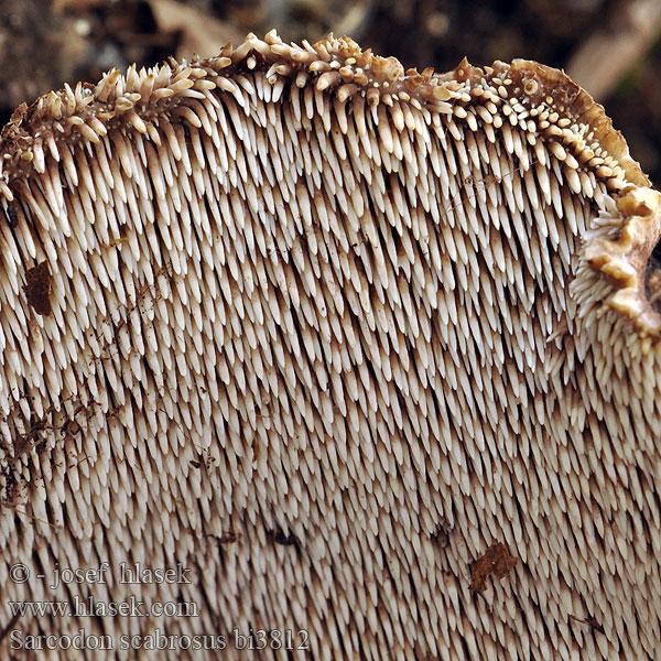 csodakenőcs méhviaszból és sárgája pikkelysömörből)