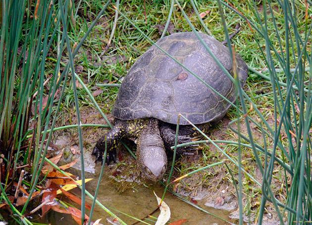 vörös foltok a teknősök bőrén)