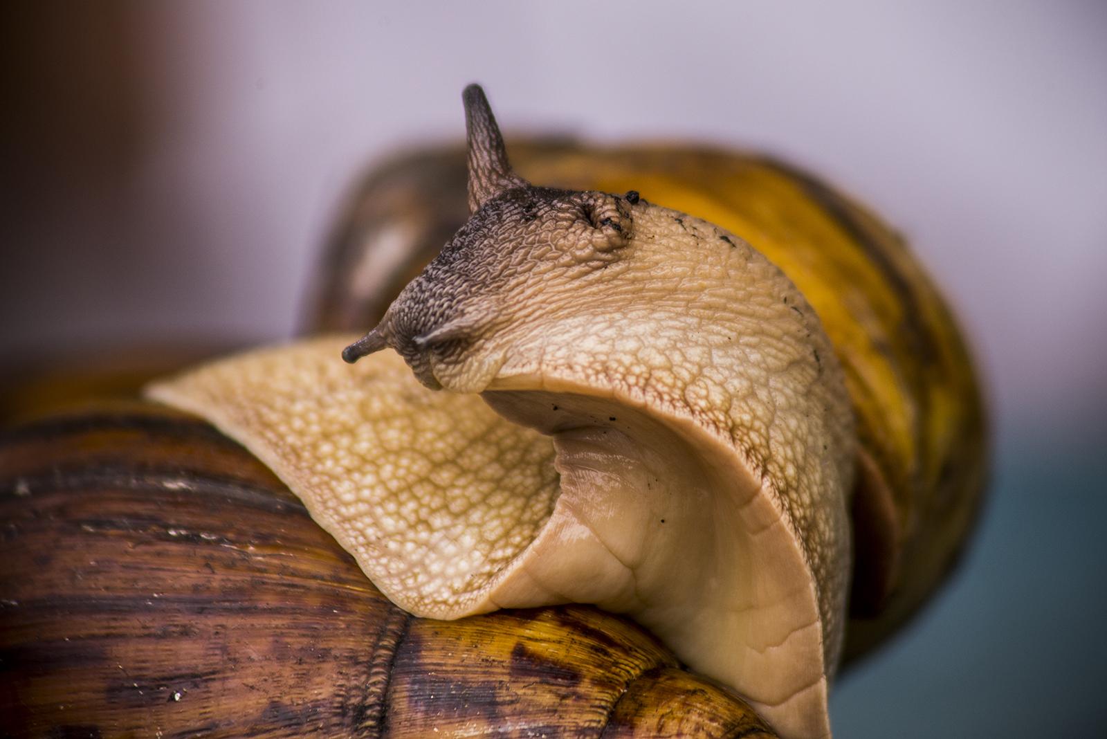Milyen a csiga nyálka az emberi bőr számára?