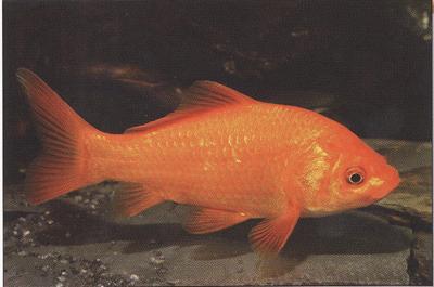 aranyhalak hasán vörös foltok vannak kerek piros foltok a kezeken mi ez