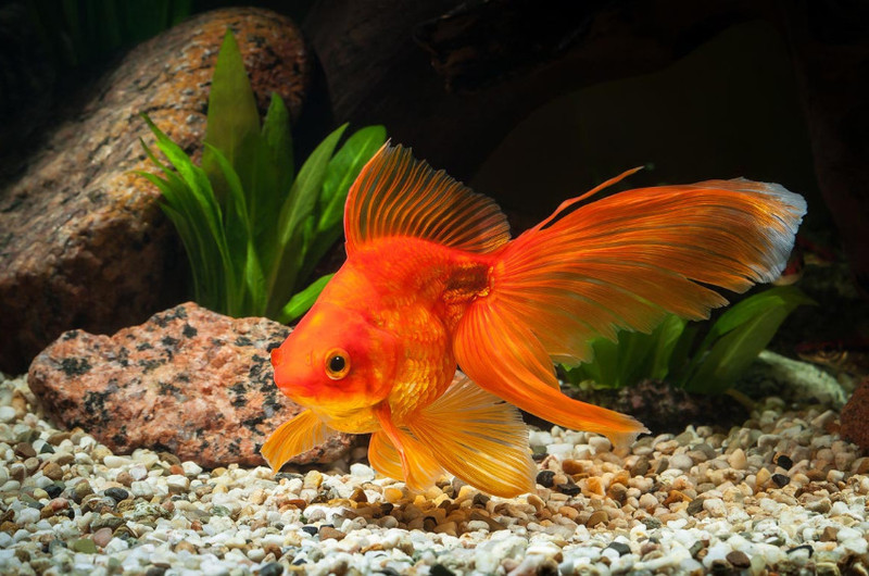 aranyhalak hasán vörös foltok vannak vörös foltok a bőrön a napon