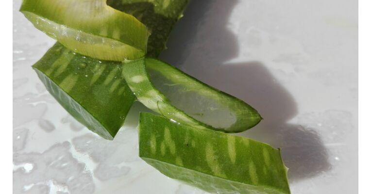 Aloe verát ekcémára, pikkelysömörre, bőrgyulladásra és bőrallergiára - ezredev.hu